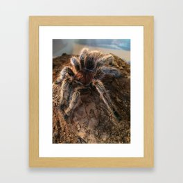 Porteri II Framed Art Print