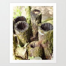 The Magic of Mother Nature Art Print