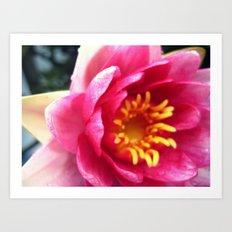 Pink WaterLily II Art Print