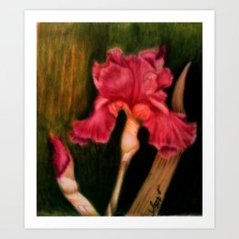 Iris in the Storm Art Print