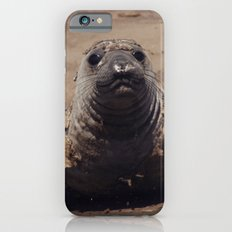 elephant seal pup iPhone 6s Slim Case