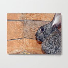 Rabbits in an open-air cage growing on a farm Metal Print