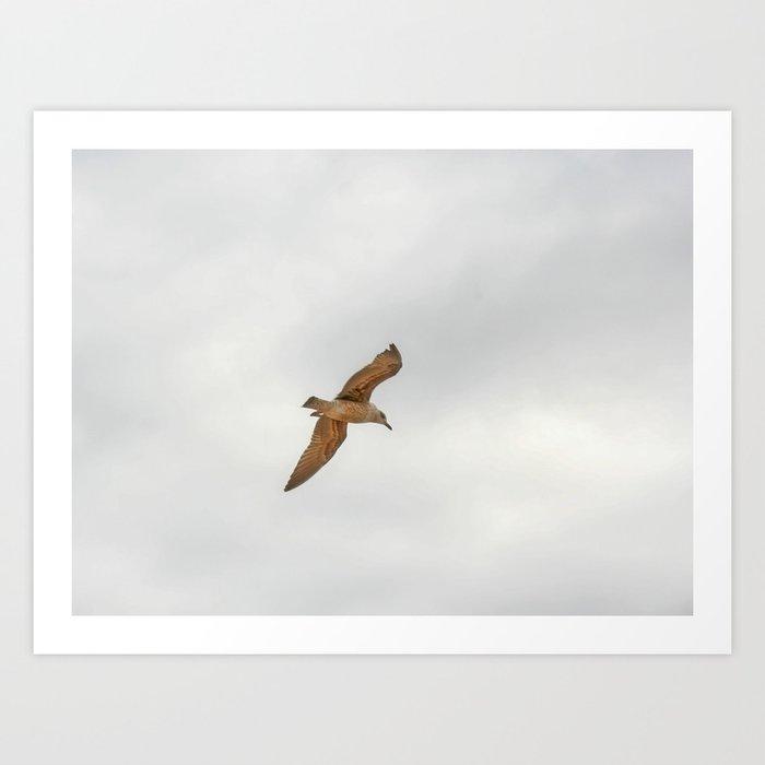 Seagull bird flying Art Print