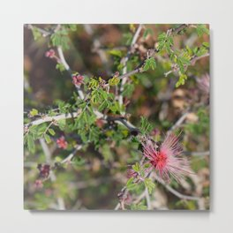 Desert Wildflower Bush Metal Print