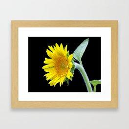 Small Sunflower Framed Art Print