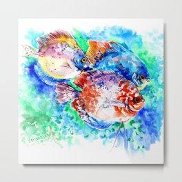 Underwater Scene Artwork, Discus Fish, Turquoise blue pink aquatic design Metal Print