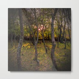 Forest, sunset, art photography at the bulgarian village Lisicite Metal Print
