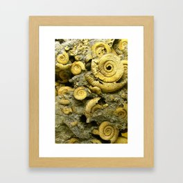 Fossils - Ammonite - Coiled Cephalopods  Framed Art Print
