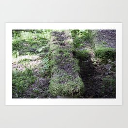 Nature reclaiming picnic bench Art Print