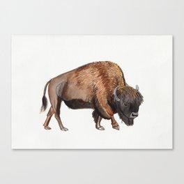 Little Watercolour Bison Drawing Canvas Print