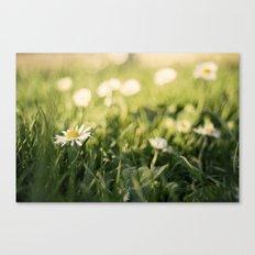 flower Margarita Canvas Print