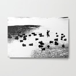 Mallard Ducks In A Lake In Black And White Metal Print