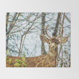 Black-Tailed Buck Throw Blanket