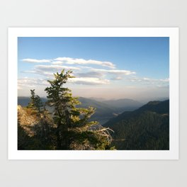 Mt. Catherine Tree  Art Print