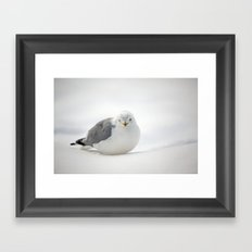 Snow Gull Framed Art Print