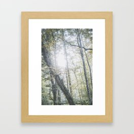 Forest (V) Framed Art Print
