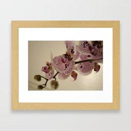 Bloom White Framed Art Print
