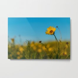 Outstanding in the Field Metal Print