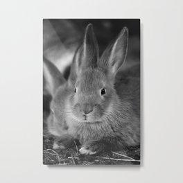 Animal Bunny Cute Ears Easter Metal Print