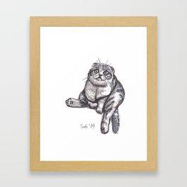Scottish Fold Framed Art Print