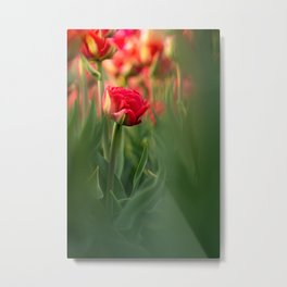 My beautiful backyard | Red tulips | The Nederlands | colored photography Metal Print