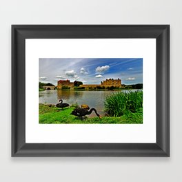 Black Swans at Leeds Castle II Framed Art Print