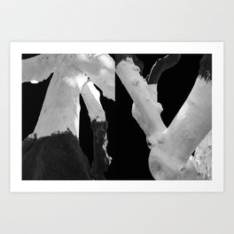 Perspective of Two Trees Art Print