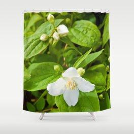 Wild Sicilian Jasmine Shower Curtain