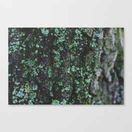 Emerald Bark Canvas Print