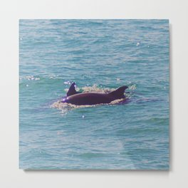 Dolphin Dorsals Metal Print