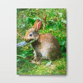 Rabbit. Metal Print