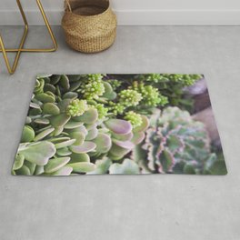 Blushing Succulents Rug