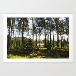 Norwegian Forest Art Print