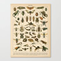 insects Canvas Prints featuring Insects by Connie Goldman