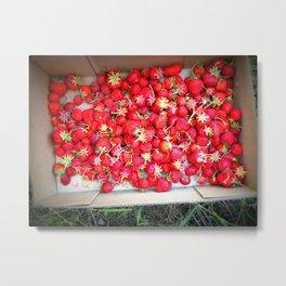 Strawberry Picking Metal Print