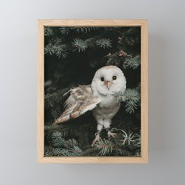 Owl in The Tree Framed Mini Art Print