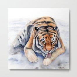 Amur Tiger Metal Print