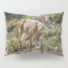 Crossing Paths with a Black-Tailed Deer Pillow Sham