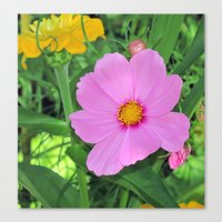 cosmos Canvas Prints featuring Cosmos by Bella Mahri-PhotoArt By Tina