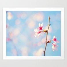 Okame Cherry Blossoms  Art Print
