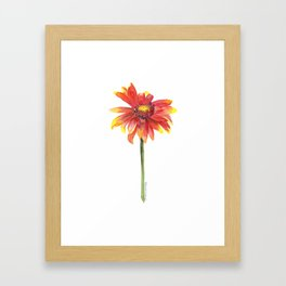 Indian Blanket Wildflower Watercolor Framed Art Print