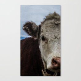 Half Cow Canvas Print