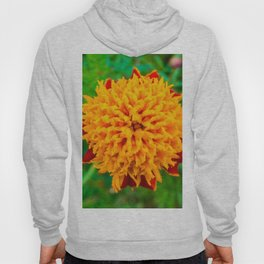 Orange Tagetes flower Hoody