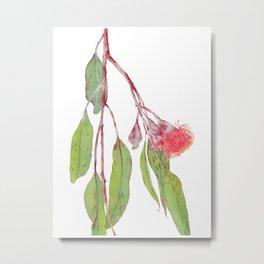 Flowering Silver Princess Eucalyptus Watercolour Metal Print