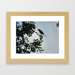 Bird in tree Framed Art Print