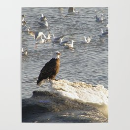 Eagle on Ice Poster