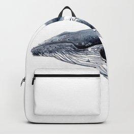 Humpback whale (Megaptera novaeangliae) Backpack