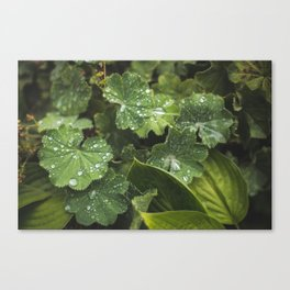 Live the leaves!!! Canvas Print