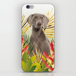 Weimaraner Dog in garden iPhone Skin