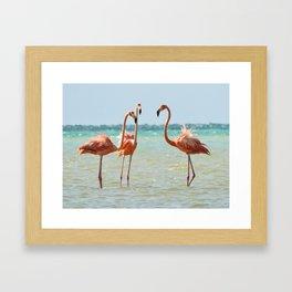 Flamingos Isla Holbox, Mexico Framed Art Print